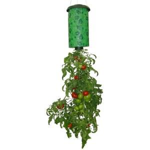 topsy-turvy-tomato_2